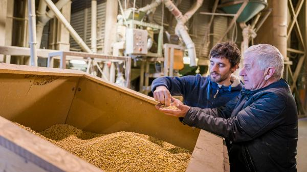 The soybeans are carefully examined before they enter our tofu factory.