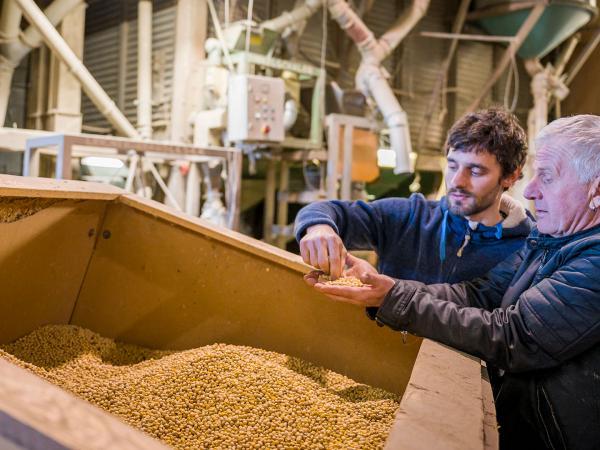 Die Sojabohnen werden genau geprüft, bevor sie in unsere Tofurei gelangen.