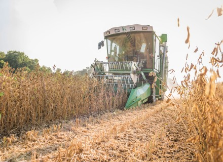 As soon as the seeds rattle in the pod, the threshing can begin.