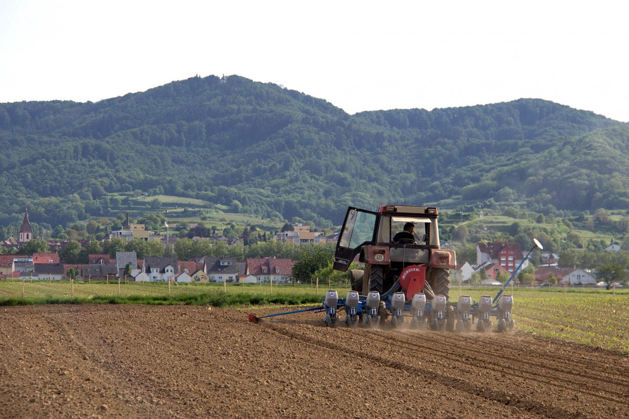 Sowing with a view of the Kaiserstuhl near Freiburg.